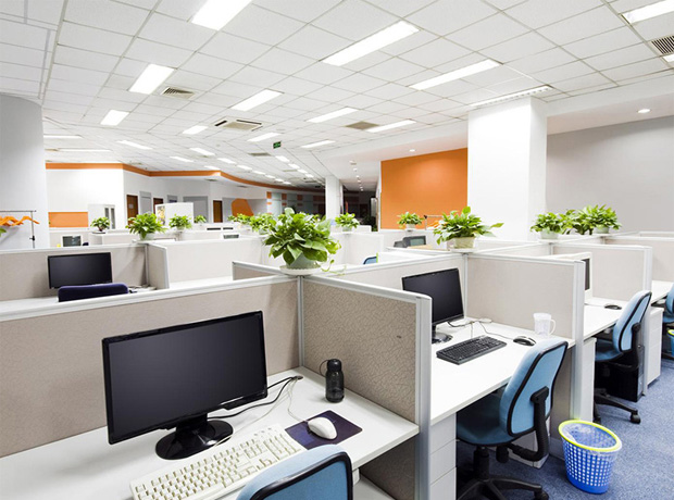 Trang trí phòng làm việc bằng cây xanh
